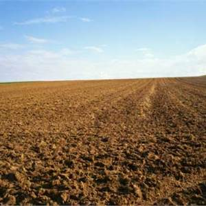 Agricultural Field for Sale in Jesolo